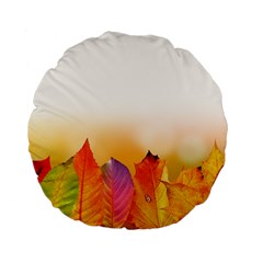 Autumn Leaves Colorful Fall Foliage Standard 15  Premium Flano Round Cushions by Amaryn4rt