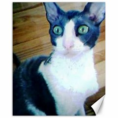 Cornish Rex Canvas 16  X 20   by TailWags