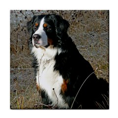 Bernese Mountain Dog Sitting Tile Coasters by TailWags
