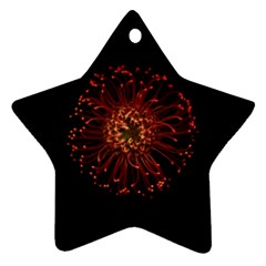 Red Flower Blooming In The Dark Ornament (star) by Onesevenart