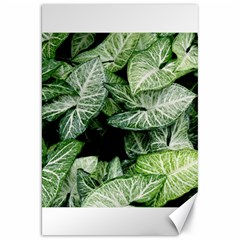 Green Leaves Nature Pattern Plant Canvas 20  X 30   by Amaryn4rt