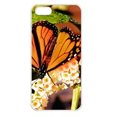 Monarch Butterfly Nature Orange Apple Iphone 5 Seamless Case (white) by Amaryn4rt