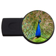 Peacock Animal Photography Beautiful Usb Flash Drive Round (4 Gb) by Amaryn4rt