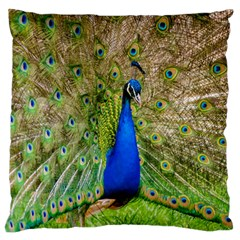 Peacock Animal Photography Beautiful Large Flano Cushion Case (two Sides) by Amaryn4rt