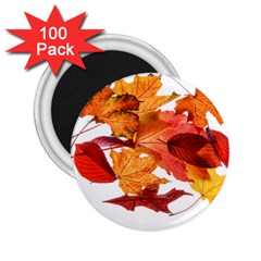 Autumn Leaves Leaf Transparent 2 25  Magnets (100 Pack)  by Amaryn4rt