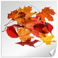 Autumn Leaves Leaf Transparent Canvas 12  X 12   by Amaryn4rt