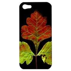 Autumn Beauty Apple Iphone 5 Hardshell Case by Nexatart