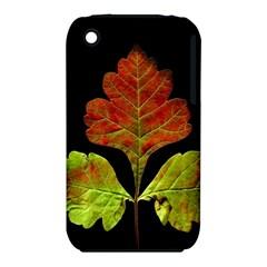 Autumn Beauty Iphone 3s/3gs by Nexatart