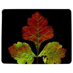 Autumn Beauty Jigsaw Puzzle Photo Stand (rectangular) by Nexatart