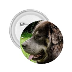 Tibetan Mastiff 2.25  Buttons by TailWags