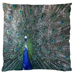 Peacock Four Spot Feather Bird Large Cushion Case (two Sides) by Nexatart