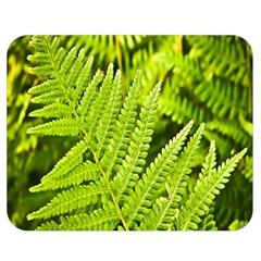 Fern Nature Green Plant Double Sided Flano Blanket (medium)  by Nexatart