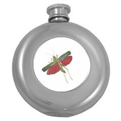 Grasshopper Insect Animal Isolated Round Hip Flask (5 Oz) by Nexatart