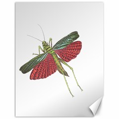 Grasshopper Insect Animal Isolated Canvas 12  X 16   by Nexatart