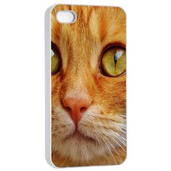 Cat Red Cute Mackerel Tiger Sweet Apple Iphone 4/4s Seamless Case (white) by Nexatart