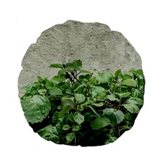 Plants Against Concrete Wall Background Standard 15  Premium Round Cushions by dflcprints