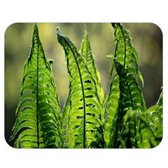 Fern Ferns Green Nature Foliage Double Sided Flano Blanket (medium)  by Nexatart