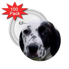 English Setter 2.25  Buttons (100 pack)