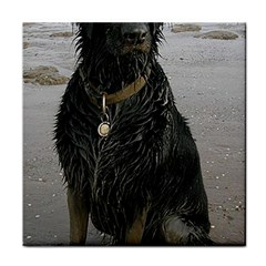 Flat Coated Retriever Muddy Wet Tile Coasters by TailWags