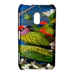 Beautifull Parrots Bird Nokia Lumia 620 by Nexatart