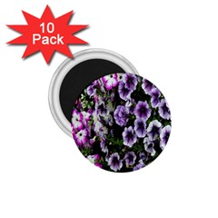 Flowers Blossom Bloom Plant Nature 1 75  Magnets (10 Pack)  by Nexatart
