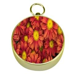 Flowers Nature Plants Autumn Affix Gold Compasses by Nexatart