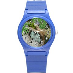 Plant Succulent Plants Flower Wood Round Plastic Sport Watch (s) by Nexatart
