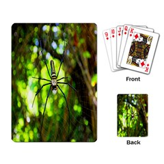 Spider Spiders Web Spider Web Playing Card by Nexatart