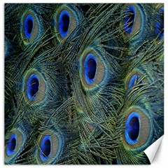 Peacock Feathers Blue Bird Nature Canvas 20  X 20   by Amaryn4rt