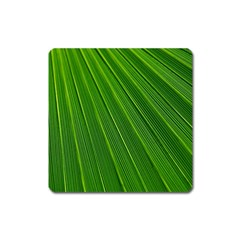 Green Lines Macro Pattern Square Magnet by Amaryn4rt