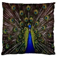 Bird Peacock Display Full Elegant Plumage Large Cushion Case (one Side) by Amaryn4rt