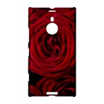 Roses Flowers Red Forest Bloom Nokia Lumia 1520