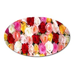 Rose Color Beautiful Flowers Oval Magnet by Amaryn4rt