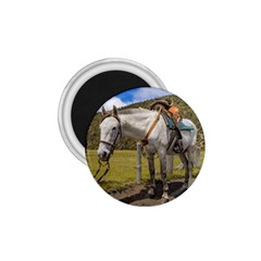 White Horse Tied Up At Cotopaxi National Park Ecuador 1 75  Magnets by dflcprints