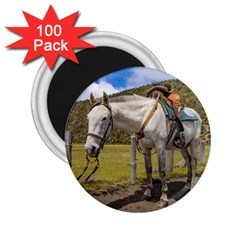 White Horse Tied Up At Cotopaxi National Park Ecuador 2 25  Magnets (100 Pack)  by dflcprints