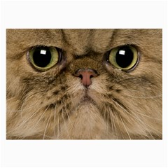 Cute Persian Cat Face In Closeup Large Glasses Cloth by Amaryn4rt
