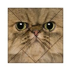 Cute Persian Cat Face In Closeup Acrylic Tangram Puzzle (6  X 6 ) by Amaryn4rt