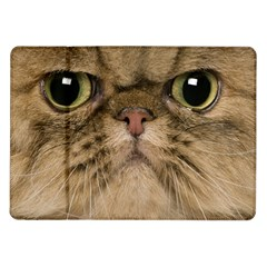 Cute Persian Cat Face In Closeup Samsung Galaxy Tab 10 1  P7500 Flip Case by Amaryn4rt