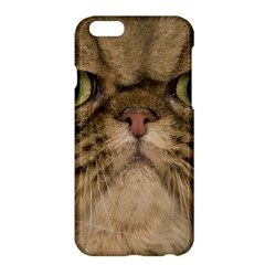 Cute Persian Cat Face In Closeup Apple Iphone 6 Plus/6s Plus Hardshell Case by Amaryn4rt