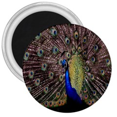 Multi Colored Peacock 3  Magnets by Simbadda