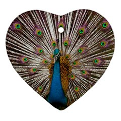Indian Peacock Plumage Ornament (heart) by Simbadda