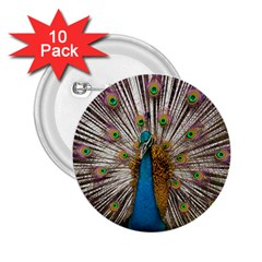 Indian Peacock Plumage 2 25  Buttons (10 Pack)  by Simbadda