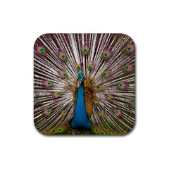 Indian Peacock Plumage Rubber Square Coaster (4 Pack)  by Simbadda