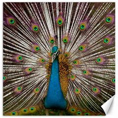 Indian Peacock Plumage Canvas 20  X 20   by Simbadda