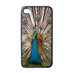 Indian Peacock Plumage Apple Iphone 4 Case (black) by Simbadda