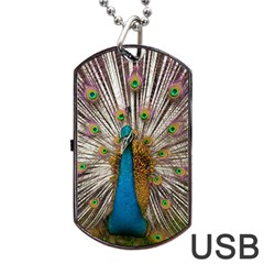 Indian Peacock Plumage Dog Tag Usb Flash (one Side) by Simbadda