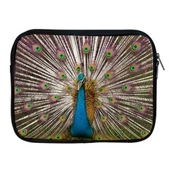 Indian Peacock Plumage Apple Ipad 2/3/4 Zipper Cases by Simbadda