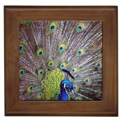 Peacock Bird Feathers Framed Tiles by Simbadda