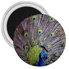 Peacock Bird Feathers 3  Magnets by Simbadda
