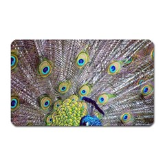 Peacock Bird Feathers Magnet (rectangular) by Simbadda